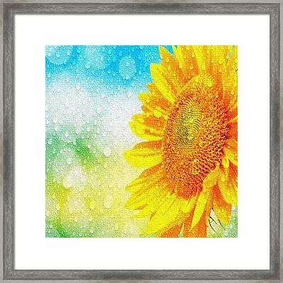 Sunflower In A Sunshower Framed Print