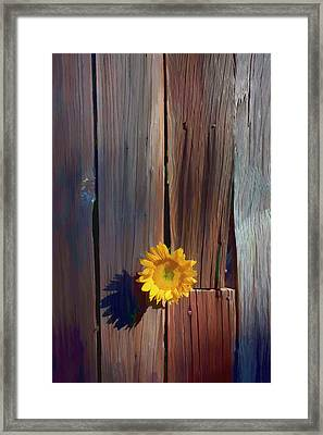 Sunflower In Barn Wood Framed Print by Garry Gay