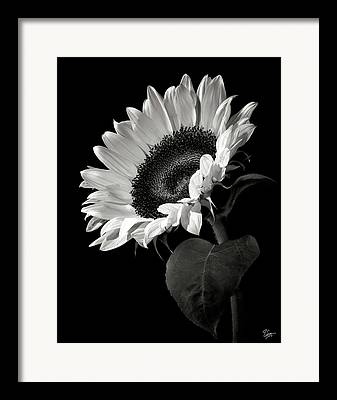 White Framed Prints