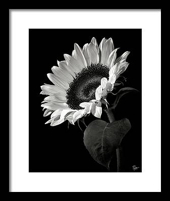 Black and white flower framed art prints fine art america black and white flower framed prints mightylinksfo Image collections
