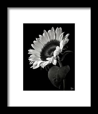 White Framed Prints