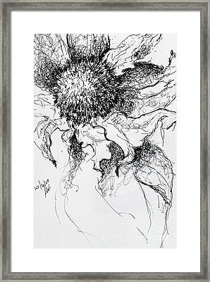Sunflower In Pen And Ink Framed Print by Amy Williams