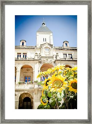 Framed Print featuring the photograph Sunflower by Jason Smith