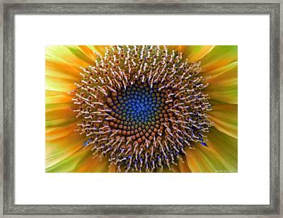 Sunflower Jewels Framed Print