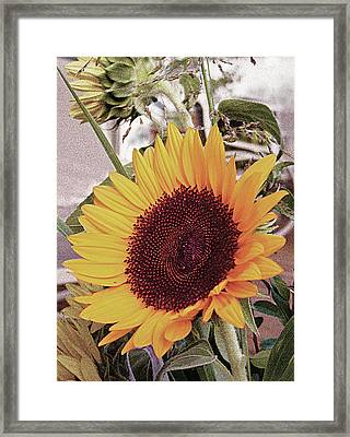 Framed Print featuring the painting Sunflower by John Dyess