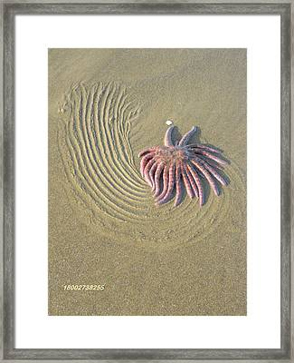 Sunflower Life Framed Print by Gallery Of Hope