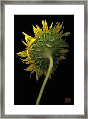 Sunflower Framed Print by Lloyd Liebes