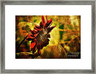 Sunflower Framed Print by Lois Bryan