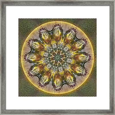 Sunflower Lollipops Framed Print