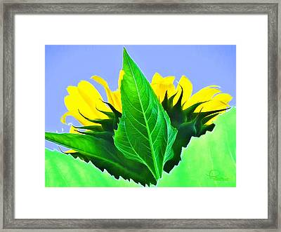 Sunflower Framed Print by Ludwig Keck