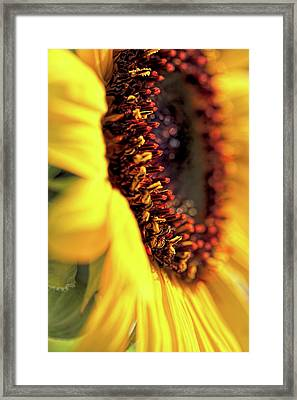 Framed Print featuring the photograph Sunflower Macro by Jennie Marie Schell