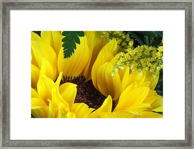 Sunflower Macro Framed Print by Tom Mc Nemar
