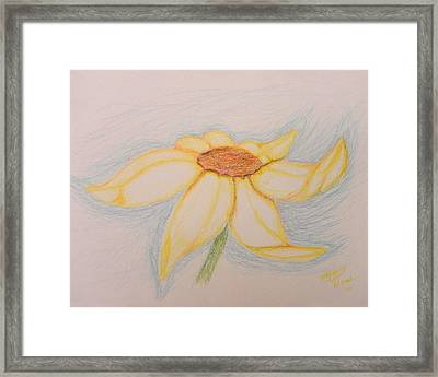 Sunflower Framed Print by MGilroy