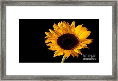 Sunflower Framed Print by Michael Herb