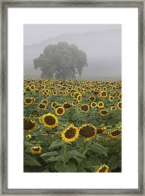 Sunflower Morning Vertical Framed Print