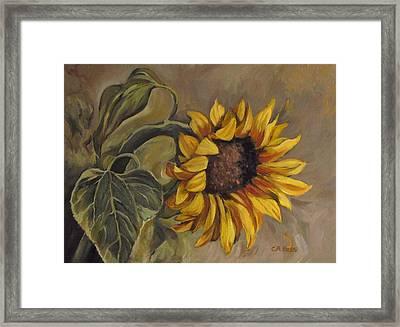 Sunflower Nod Framed Print by Cheryl Pass