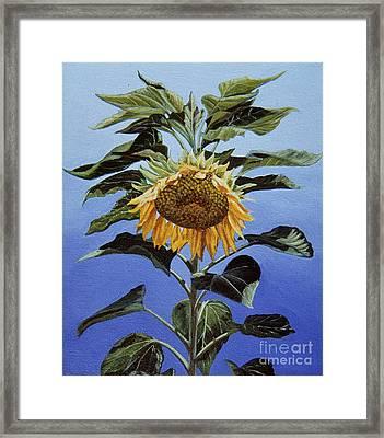 Sunflower Nodding Framed Print by Jiji Lee