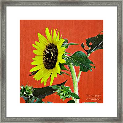 Framed Print featuring the photograph Sunflower On Red 2 by Sarah Loft