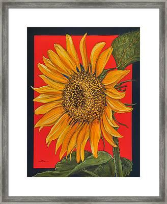 Da153 Sunflower On Red By Daniel Adams Framed Print