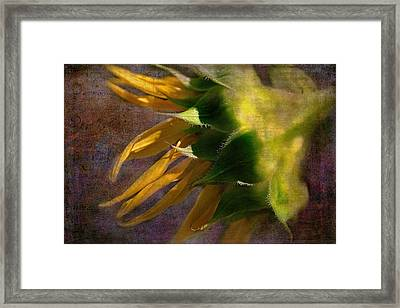 Sunflower On The Side Framed Print by Bellesouth Studio