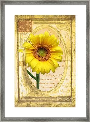 Sunflower On Vintage Postcard Framed Print