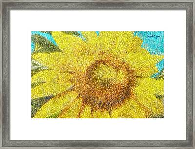 Sunflower - Pa Framed Print by Leonardo Digenio