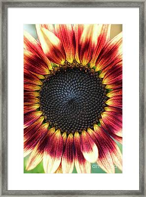 Sunflower Pastiche Framed Print by Tim Gainey
