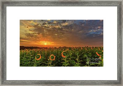 Sunflower Peak Framed Print