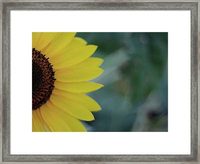 Sunflower Peeking.. Framed Print