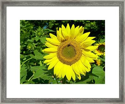 Sunflower Power Framed Print