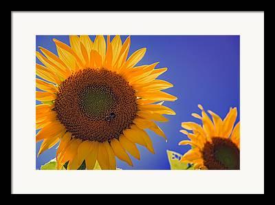 Pollenation Framed Prints