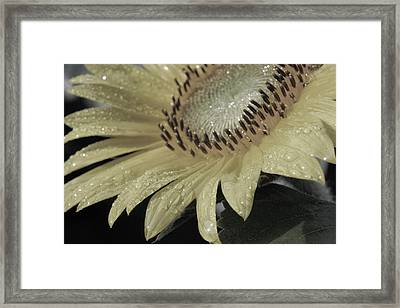 Sunflower Rain Framed Print by Carolyn Stagger Cokley