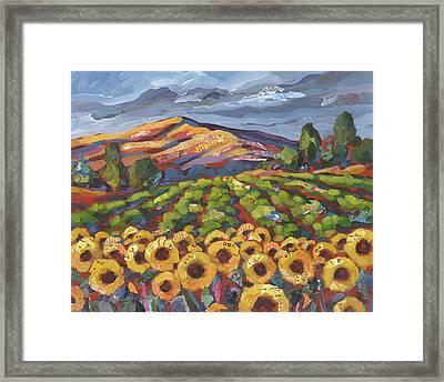Sunflower Ranch Framed Print