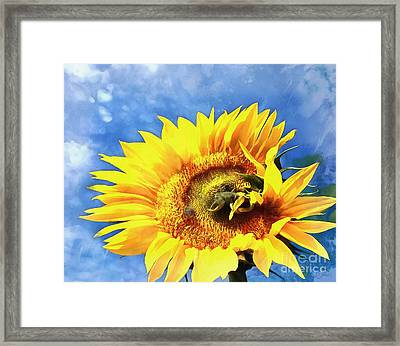 Sunflower - Reach Framed Print