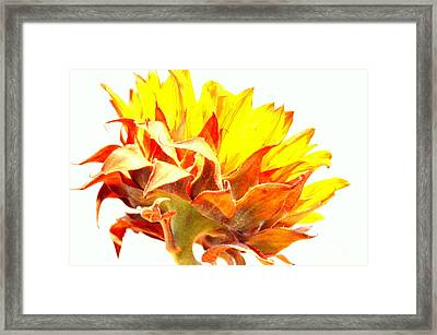 Sunflower Reflecting The Sunlight Framed Print by Mary Deal