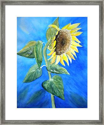 Sunflower  Framed Print by Sandy Fisher