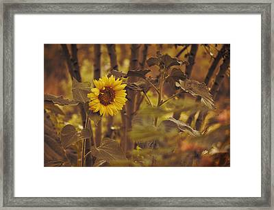 Framed Print featuring the photograph Sunflower Sentry by Douglas MooreZart