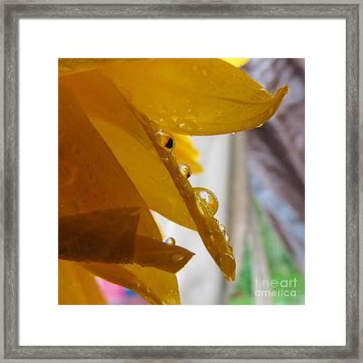 Sunflower Series II Framed Print