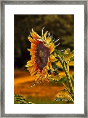 Sunflower Series Framed Print by Wendy Mogul