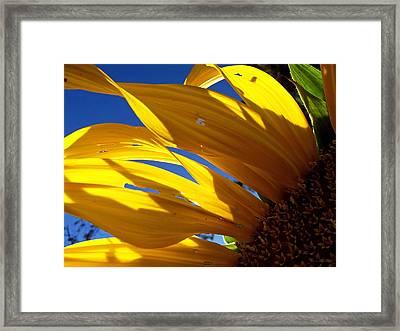 Sunflower Shadows Framed Print