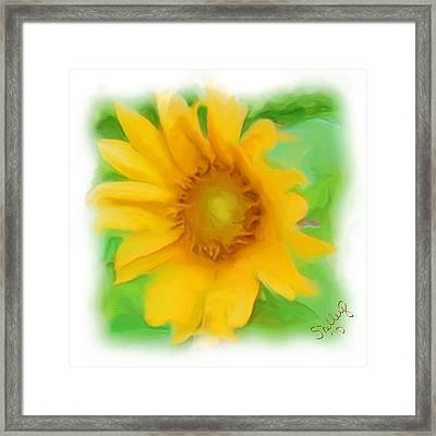 Sunflower Framed Print by Shelley Bain