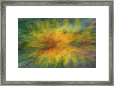 Framed Print featuring the photograph Sunflower Shimmy by Deborah Hughes