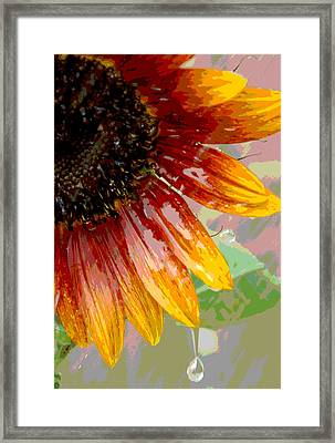 Sunflower Shower Framed Print by Lori Mellen-Pagliaro