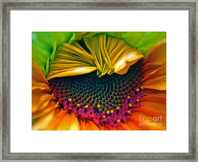 Sunflower Smoothie Framed Print