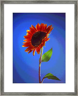 Framed Print featuring the photograph sunflower Solitaire by Joyce Dickens