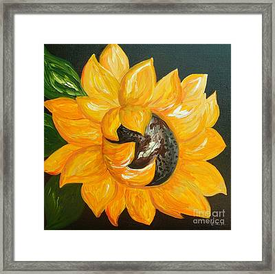 Sunflower Solo Framed Print by Eloise Schneider