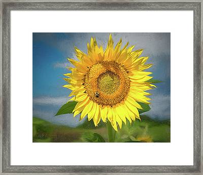 Sunflower Solo Framed Print