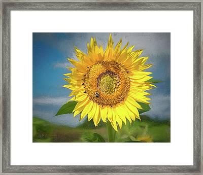 Sunflower Solo Framed Print