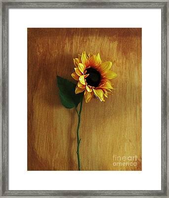 Sunflower Standing Framed Print by Marsha Heiken