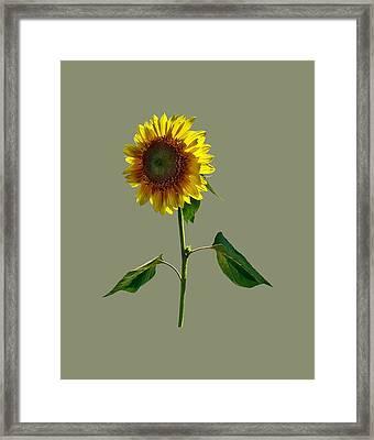 Sunflower Standing Tall Framed Print by Susan Savad